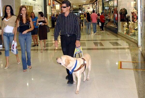 Photo of Cómo actuar y comportarse ante un Perro Guía