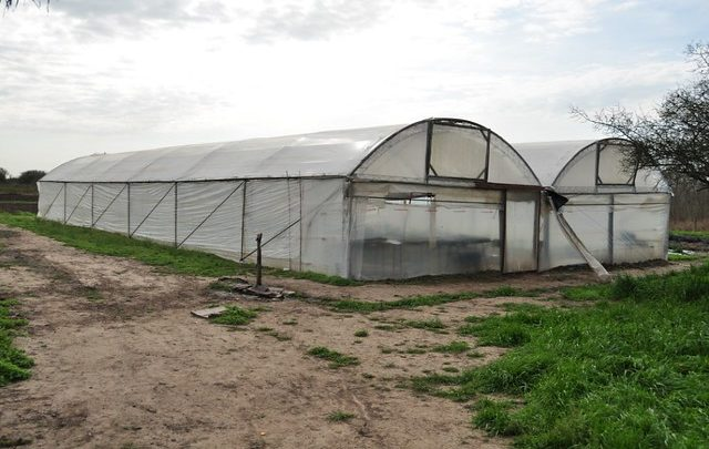 Photo of Salvajemente agredido en su invernadero por el inmigrante que le pidió trabajo