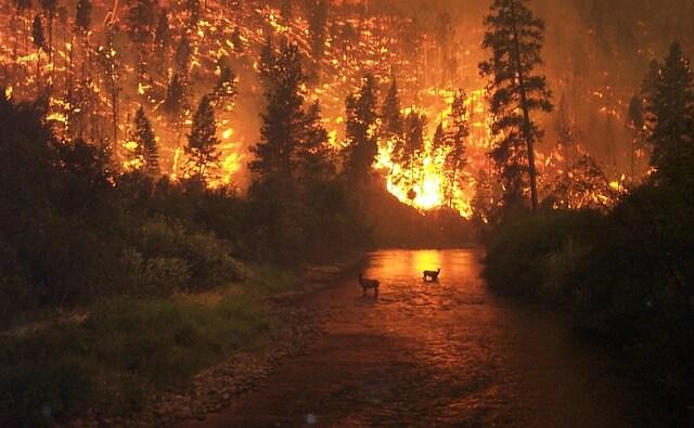 Photo of Australia, los incendios forestales, el clima y la secular Revolución