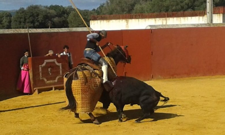 Photo of El toro bravo y el dolor