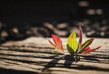 Photo of Resiliencia