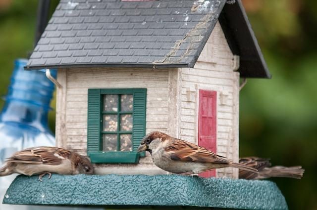 Photo of El mensaje sobre la inmigración, que arrasa en las redes sociales: «El comedero para pájaros» -VIRAL