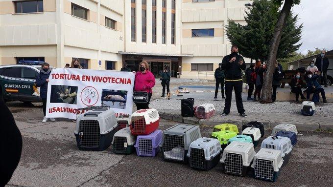 Photo of Crueldad extrema y sistemática tortura: el día a día en los centros de experimentación animal. Por Luys Coleto
